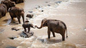 Sostenibilidad Social. Una necesidad para supervivencia de las especies.